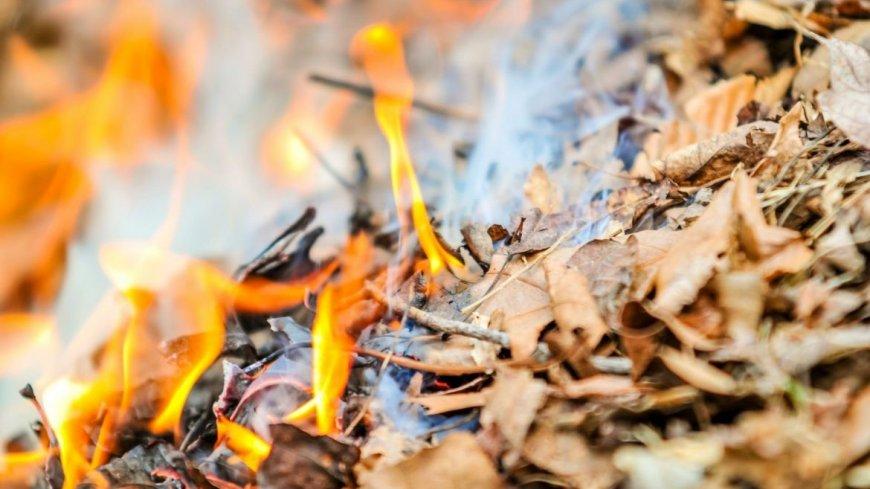 Przypominamy o zakazie spalania odpadów roślinnych